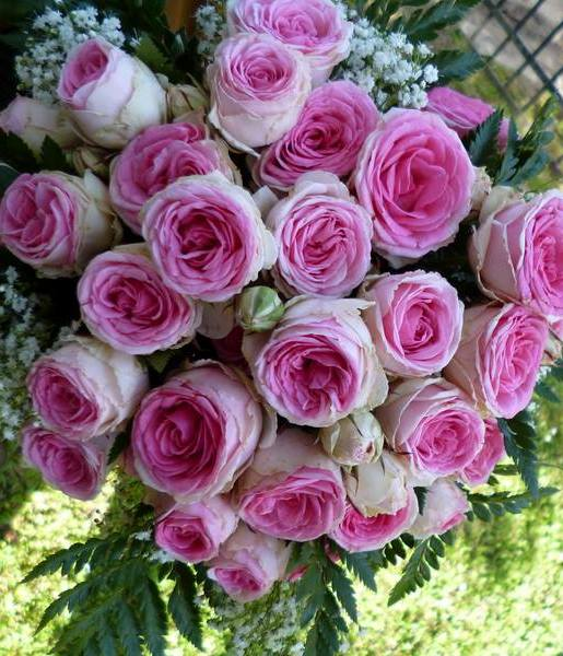 bouquet rose rosa a grappolo