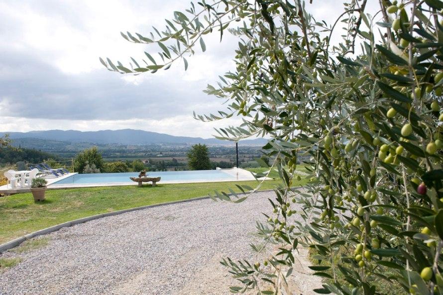 Matrimonio Tra Gli Ulivi Toscana : Nozze ganze tutto per sposarsi in toscana gli ulivi come